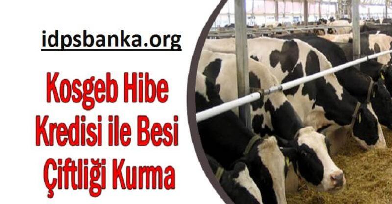 KOSGEB Hibe Kredi ile besi çiftliği kurma